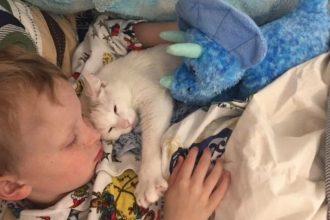 Esta gata perdió a sus crías pero consiguió una amorosa…