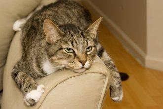 6 signes qui indiquent que votre chat s'ennuie