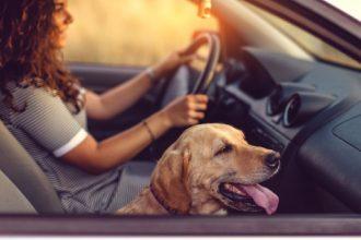 Votre chien a le mal des transports ? Essayez donc ces astuces