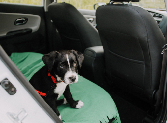 chien qui a peur de la voiture