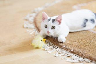 10 idées pour jouer avec son chat