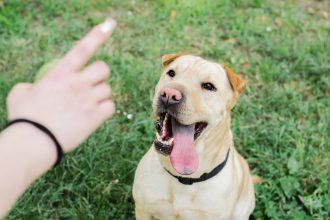 Comment choisir un éducateur canin ?