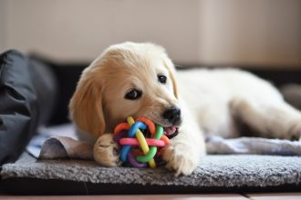 10 idées pour jouer avec son chien à la maison