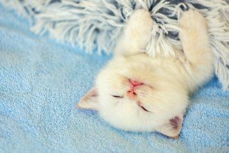 Mon chaton vomit : que faire ?