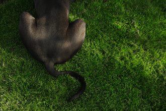 Mon chien se frotte les fesses par terre, pourquoi ?