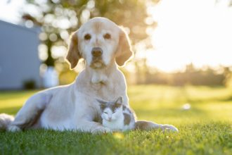 Warning: anti-parasite dog treatments can be lethal to cats