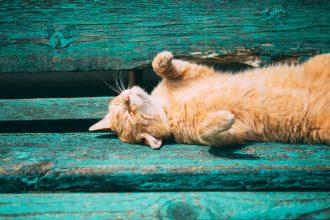La déshydratation chez le chat