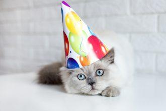 Quand est-ce qu'un chaton devient adulte ?