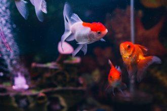 7 common pet fish diseases