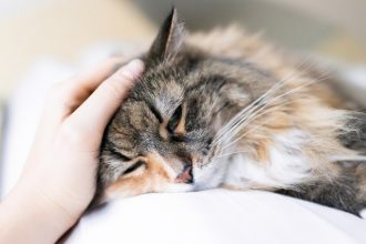 Self-medication: the dangers of paracetamol for your cat