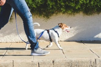 Germany: dog owners might be required  to walk their dogs twice a day