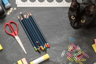 Back to school: an overwhelming time for your animals