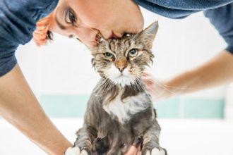 Est-il nécessaire de laver son chat ?