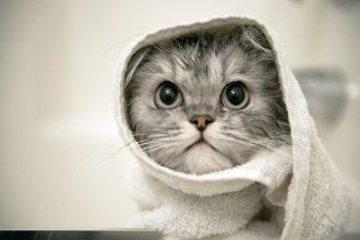 Is it necessary to give my cat a bath?