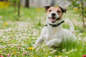 Le danger de la tique pour votre chien